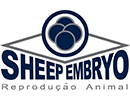 Sheep Embryo