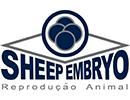 Sheep Embryo